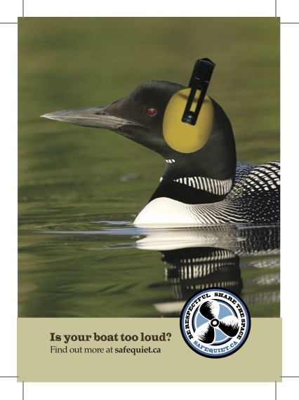 5x7-loon-front